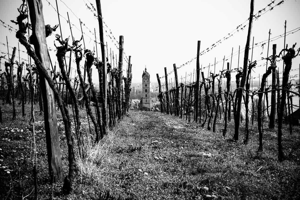 Wein + Stein